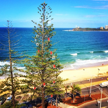 Norfolk island pine christmas tree queensland